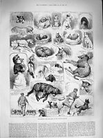 Old Antique Print 1883 Kennel Club Dog Show Crystal Palace Lady Brassey 19th