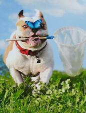 """I Still Get Butterflies!"" ROMANTIC BIRTHDAY CARD Bulldog AVANTI"