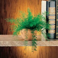 Air Fern Plant Decor No Water No Soil ~ Set of 2 ~