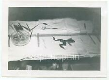 Hapless Unfortunate Frog on Dissecting Table Vintage 1950s Photo Dissection