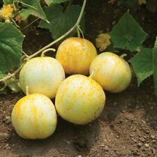 Lemon Cucumber Seeds, Budamkaya, Burpless, NON-GMO, Variety Sizes, FREE SHIP