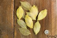 """100 x Natural Skeleton Yellow Rubber Leaves Approx 2.8""""/7 cm Craft Wedding Card"""