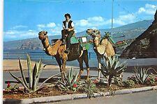 BG11889 tenerife tipicos camellos de alquiler camel   spain