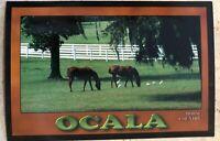 Tourist Postcard ~ Ocala Horse Country Florida USA ~ Thoroughbred horse farms