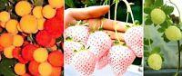 Erdbeeren Samen Set / Deko Einfache einfach zu haltende Pflanzen für die Wohnung