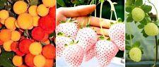 Schön blühend - Set : Winterharter Erdbeerbaum + weisse + gelbe Erdbeere ❂ Samen