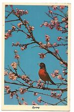 ROBIN Bird First Sign of SPRING PINK BLOSSOM TREE Blooming Flowers Postcard