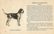 American Foxhound Dog Rare Vintage Art Drawing Breed Description From 1939