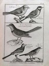 BALLERINA Motacilla Alba Benard 1790 HISTOIRE NATURELLE Ornitologia Uccelli