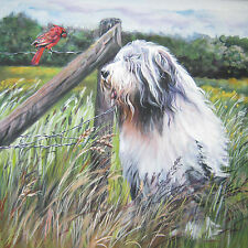 Bearded Collie dog portrait canvas PRINT of LAShepard Painting beardie art 8x8""
