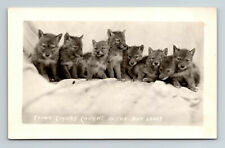 1926-40s Young Coyotes Caught in the Badlands S. Dakota Real Photo RPPC Postcard