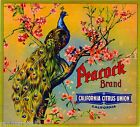Riverside Peacock Bird Orange Citrus Fruit Crate Label Vintage Art Print