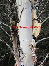 250 seeds - White Birch - Betula papyrifera - Paper BirchFrench - bouleau blanc-