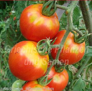 🔥 🍅 STRIPED SIBERIAN Tomate*Tomaten f.kurze Sommer*10 Samen