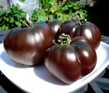 VEGETABLE BLACK TOMATO - 60 SEEDS - BLACK PRINCE - Tomato seeds - Heirloom