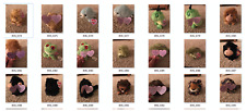 Entire Puffkins Collection (lot of 100!) from SWIBCO WITH TAGS - large variety
