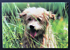 Cairn Terrier Photo Blank Note Card Yellow Floppy Eared Mix? C. Prescott-Allen