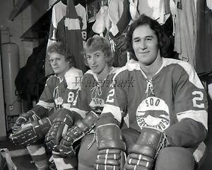 OMJHL 1977 - 78 Wayne Gretzky Soo Greyhounds Wayne Gretzky 8 X 10 Photo Picture