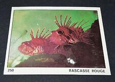 N°250 RASCASSE ROUGE POISSON PANINI 1970 TOUS LES ANIMAUX EDITIONS DE LA TOUR