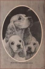 COCKER SPANIEL DOGS by George Ford Morris, vintage print, authentic 1952