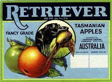 Tasmania Australia Labrador Retriever Dog Apple Fruit Crate Label Art Print