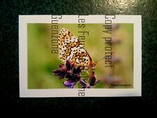 MELITEE DU PLANTAIN  PAPILLON BUTTERFLY photo   carte postale postcard