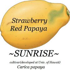 SUNRISE Strawberry RED PAPAYA Hybrid SUNUP SOLO BEST Papaya UH Cultivar 60+ SEED