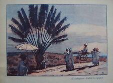 COMPOSITION AUGUSTE LEROUX MADAGASCAR L ARBRE DU VOYAGEUR