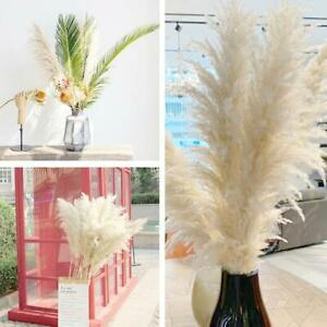 1pc Natural Dry Pampas Grass Reed Bunch Flower Plant Large Reed Dried Flower