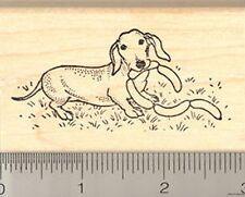 FUN Dachshund Rubber Stamp WM wiener dog hot H7209