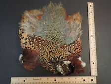 Lot 12, Ringneck Pheasant Skin Feathers for  Fly Tying, No Head or Tail