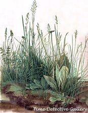 """""""Great Piece of Turf"""" by Albrecht Durer - Giclee Art Print"""