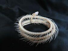 Véritable squelette d'un serpent Ptyas Korros taxidermie  ostéologie