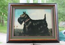 Paul Stagg -Printed Oil on Canvas- Scottie Scottish Terrier Dog - Framed