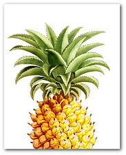 Pineapple Print, Botanical Tropical Fruit Art, 8 x 10 Inches, Unframed