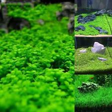 Fish Tank Aquarium Plant Seeds Aquatic Water Grass  Garden Foreground Plant BN