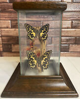 Vintage Real Mounted Taxidermy Butterflies & Flowers Glass Display Case Oddity