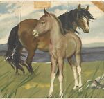Sioux's Horse Postcards