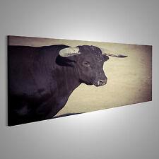 Bild auf Leinwand Mut, Bruch des Stierkampfes, wo ein Stier kämpft ein DLK-Pano