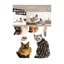 Il gatto e il topo Nouvelles images HOST018