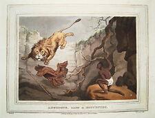 Leone caccia Leone Africa hottentotte altkolorierter rame in chiave 1813 AQUATINTA