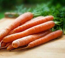 ☺1000 graines de carotte touchon