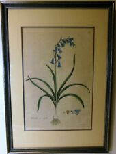 Rare 18C Curtis Original Framed BOTANICAL Color Engraving BLUE BELL Hyacinthus