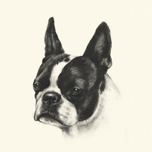 Dog Show Ring Number Clip Pin Breed - Boston Terrier