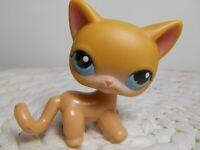 petshop authentic littlest LPS chat européen shorthair euopean cat orange #71