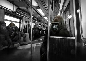 GILLIE AND MARC. Direct from artists. Authentic photographic Gorilla print
