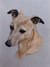 WHIPPET CHARMING DOG GREETINGS NOTE CARD SINGLE DOG BEAUTIFUL HEAD STUDY