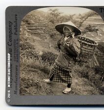 YOUNG GIRL IN THE FAMOUS TEA FIELDS OF SHIZUOKA, JAPAN STEREOVIEW
