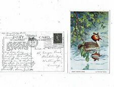 POST CARD ART CARD BY WINIFRED AUSTEN BIRD SERIES A GREAT CRESTED GREBE