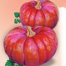 Seeds Giant Pumpkin Kavbuz Organically Grown Heirloom Vegetable